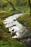 Bos rivier Royalty-vrije Stock Foto's