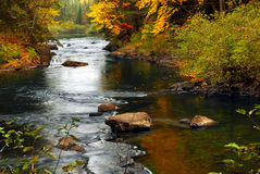 Bos rivier in de herfst Stock Foto