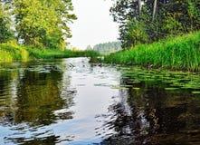 Bos rivier met zuiver water Stock Foto's