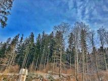 Bos in Roemenië stock afbeeldingen