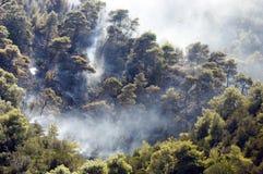 Bos schade die door branden wordt veroorzaakt Stock Foto