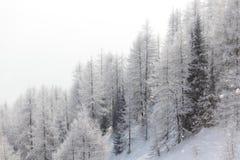 Bos in sneeuw Royalty-vrije Stock Afbeelding