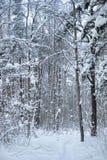Bos sneeuwscène Stock Fotografie