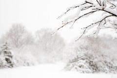 Bos sneeuwscène Royalty-vrije Stock Fotografie