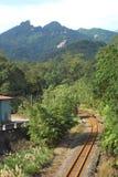Bos spoorweg. Stock Fotografie