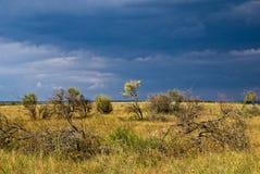 Bos-steppe vóór het onweer Stock Afbeelding