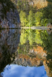 Bos stroom Stock Afbeeldingen