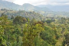 Bos in Tanzania Royalty-vrije Stock Foto's