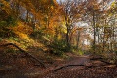 Bos tijdens de herfst in Isar in München royalty-vrije stock fotografie