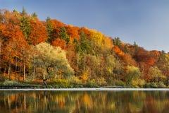 Bos tijdens de herfst in Isar in München stock afbeelding