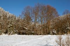 Bos tijdens de winter Stock Fotografie