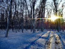 Bos tijdens de winter Royalty-vrije Stock Fotografie
