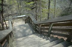 Forest Stairs Royalty-vrije Stock Afbeeldingen