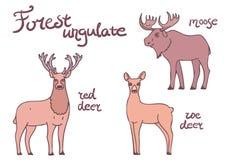 Bos ungulate geplaatste dieren Stock Foto's