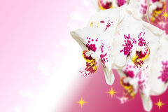 Bos van bevlekte orchideeënbloemen op gradiënt stock fotografie