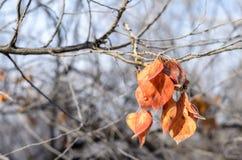 Bos van bladeren. Stock Fotografie