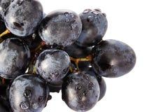 Bos van blauwe die druiven met waterdalingen worden behandeld Royalty-vrije Stock Foto