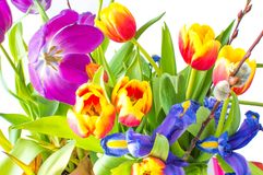 Bos van bloemen Royalty-vrije Stock Afbeeldingen