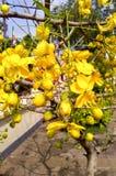 Bos van bloemen in tuin Royalty-vrije Stock Foto's