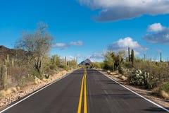 Bos van cactus in het Park van West- saguaro Nationaal Tucson stock afbeelding