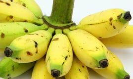 Bos van Dame Fingers Banana Royalty-vrije Stock Foto