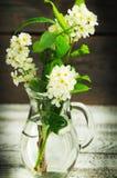 Bos van de bloemen van de vogelboom Stock Foto's