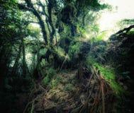 Bos van de fantasie het tropische wildernis in surreal kleuren royalty-vrije stock afbeelding