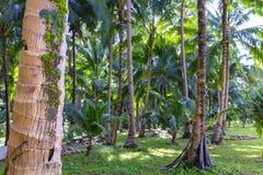 Bos van de Philippino het tropische wildernis royalty-vrije stock afbeeldingen