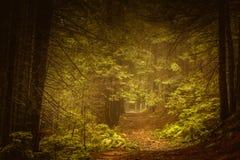 Bos van de pijnboom het donkere herfst in mist Royalty-vrije Stock Foto