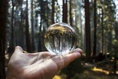 Bos van de Reuzebomen van de Californische sequoiasequoia in Californië Gevangen Gla stock afbeelding