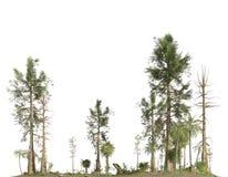 Bos van de secundaire die era op witte 3D illustratie wordt ge?soleerd als achtergrond stock illustratie