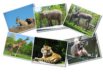 Bos van dierenfoto's Stock Foto