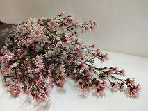 bos van droge bloemen op witte achtergrond stock afbeeldingen