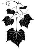 Bos van druiven Stock Foto's