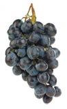 Bos van druiven Stock Fotografie