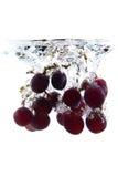 Bos van druiven het vallen Stock Afbeeldingen