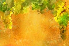 Bos van druiven - slinger stock afbeeldingen