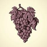 Bos van druiven Vector tekening Stock Foto's