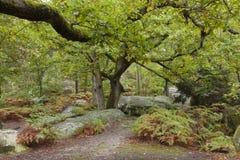 Bos van Fontainebleau Stock Afbeeldingen