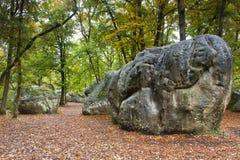 Bos van Fontainebleau Stock Foto's