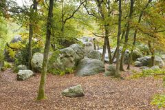 Bos van Fontainebleau Stock Fotografie