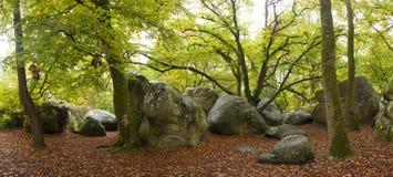 Bos van Fontainebleau Royalty-vrije Stock Foto
