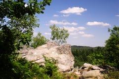Bos van Fontainebleau Frankrijk Stock Afbeelding