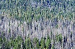 Bos van gebrande bomen en groen Royalty-vrije Stock Afbeeldingen