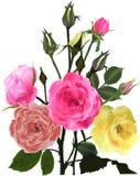Bos van gele en roze rozen op wit Royalty-vrije Stock Foto