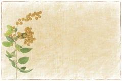 Bos van gele lijsterbes op papier royalty-vrije stock foto