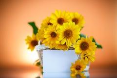 Bos van gele madeliefjebloemen Stock Afbeeldingen