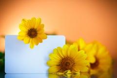 Bos van gele madeliefjebloemen Royalty-vrije Stock Afbeeldingen