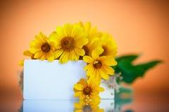 Bos van gele madeliefjebloemen Stock Foto