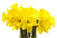 Bos van gele narcissen Stock Fotografie